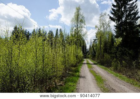Green Foliage At A Country Road