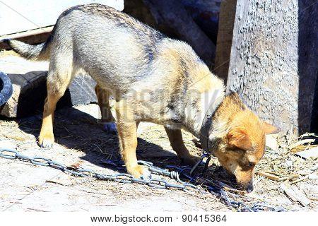 Small Dog Eating