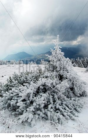 Beautiful scenery of several hoarfrost and snow covered trees surrounded by mountains in snowy froze