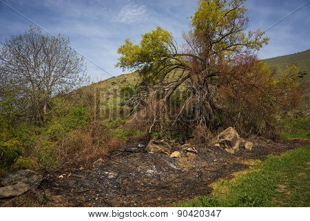 Fields And Trees After The Fire, Prespa, Greece
