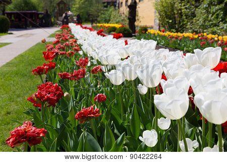Beautiful Flower Alley