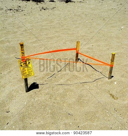 A Tagged and Protected Sea Turtle nest