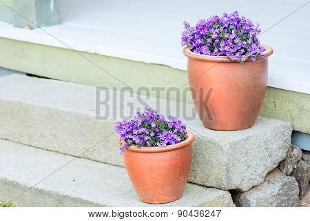 Purple Flowers