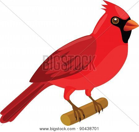 Cardinal - Illustration