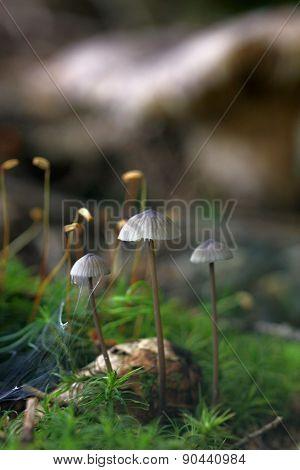 Unidentified Gray Mushrooms