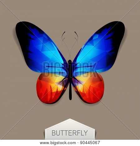 vector butterfly with blue-orange wings