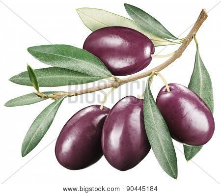 Kalamata olives with leaves on a white background. File contains clipping paths.