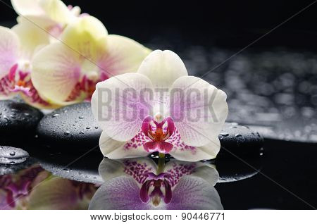 Beautiful white orchid and therapy stones