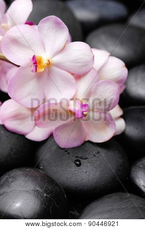 Beautiful orchid with and therapy stones