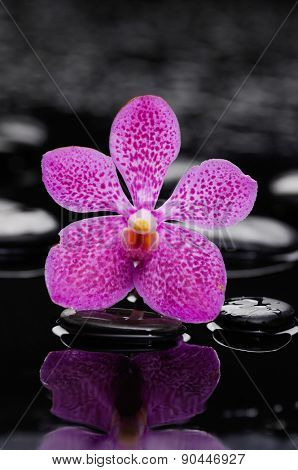beautiful pink orchid with therapy stones