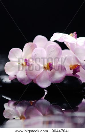 Lying down white orchid and therapy stones