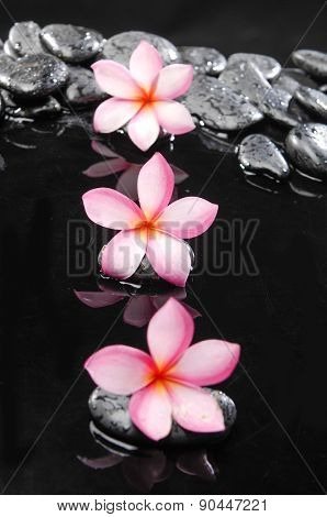 Zen wet stones and three frangipani