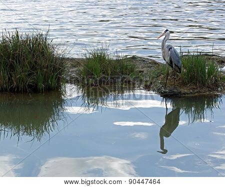 Heron on his island. Inversion of the sky and water