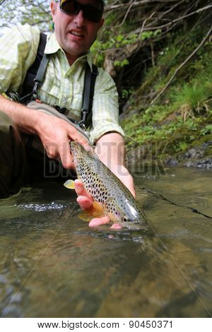 Fisherman releasing recently caught brown trout