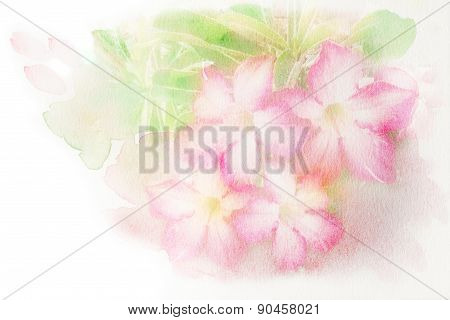 Flower (desert Rose; Impala Lily; Mock Azalea) Watercolor Illustration.