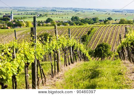 view of vineyard near Unterretzbach, Lower Austria, Austria