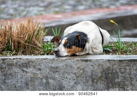 Lonely and sad homeless dog lying on the street.