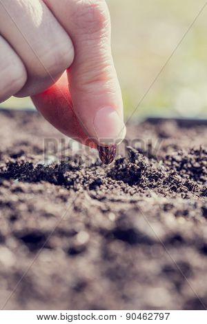 Close Up Of The Fingers Of A Person Planting A Bean Seed In The Ground Conceptual Of Business Startu