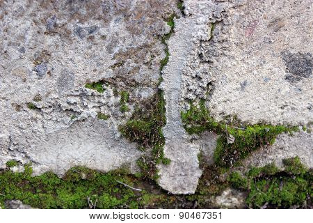Green Moss on the wall