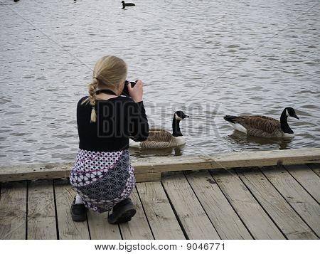 Goose photographer