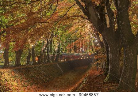 Maple Corridor At Nashigawa River, Japan