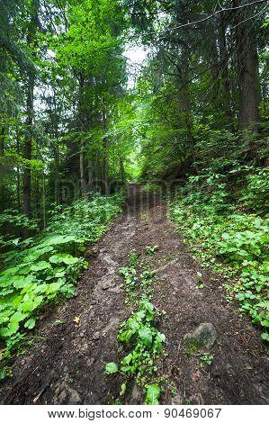 Trekking Trail At Deep Mountains Forest. Carpathian, Ukraine