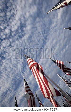 Flags V