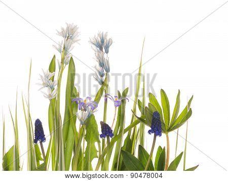 Early Wild Flowers