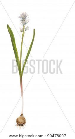 Delicate Spring Flower