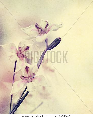 Grunge Image Of Orchid Flowers