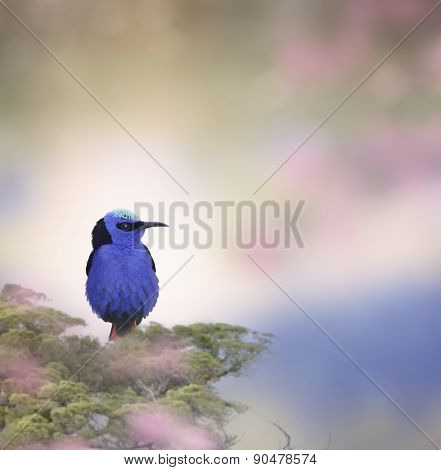 Honeycreeper Bird Perched On A Branch
