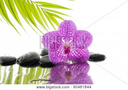 Still life with palm and wet stones with pink orchid