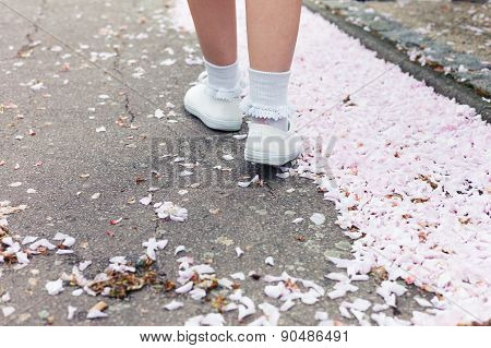 Woman Walking Amongst Cherry Blossom In Park