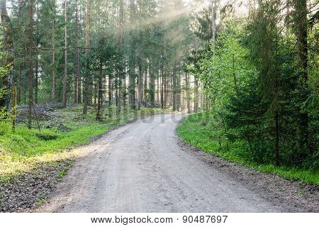 Empty Country Road In Forest