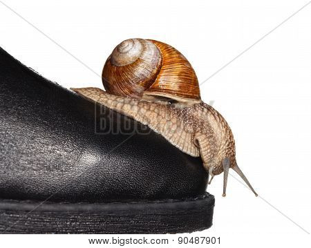 Snail Looking Down From Boot Toe