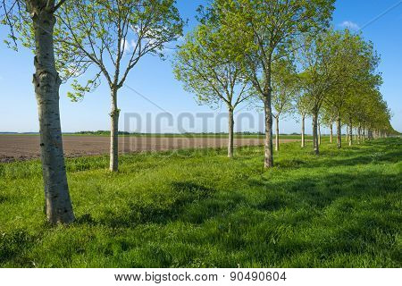 Waving grass along a plowed field in spring