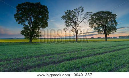 Sunrise Over Green Field