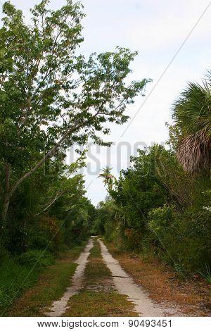 Dirt Path Trail