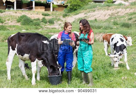 Veterinary On A Farm