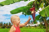 stock photo of banana tree  - Small smiling child exploring the nature  - JPG