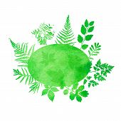 picture of fern  - Summer watercolor background with green grass and ferns - JPG