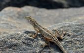 foto of lizard skin  - little lizard looking around on the rock in nature detail photo - JPG
