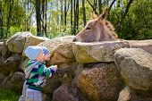 picture of donkey  - Twins feeding a hungry donkey on farm - JPG