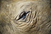 image of rhino  - Close up rhino eye or elephant eye  - JPG
