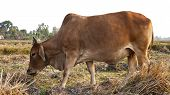 stock photo of pasture  - Cows on a summer pasture In the morning - JPG