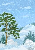 stock photo of snow clouds  - Winter Christmas Woodland Landscape with Pine and Fir Trees - JPG