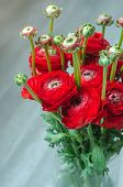 picture of buttercup  - Colorful romantic bouquet of flowers ranunculus buttercup macro spring on vase card - JPG