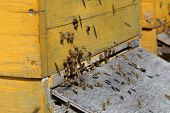 pic of beehive  - many flying bees in front of a beehive