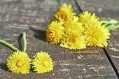 picture of dandelion  - Two dandelion and a bouquet of dandelions in the background lying on a wooden board - JPG