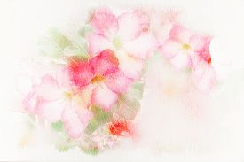 pic of azalea  - Abstract watercolor illustration of blossom pink flower  - JPG
